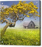 It's A Beautiful Day Acrylic Print by Debra and Dave Vanderlaan