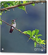 It's A Big World Out There... Acrylic Print