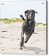 It's A Dog's Life Acrylic Print