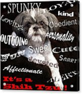 It's A Shih Tzu Acrylic Print by William Schmid