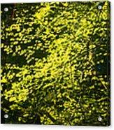 It's Autumn Time Acrylic Print