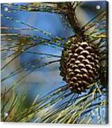 It's Beginning To Look A Lot Like Christmas Acrylic Print
