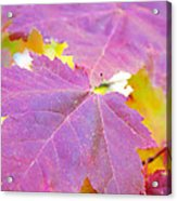 It's Fall Acrylic Print