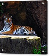 Its Good To Be King Acrylic Print