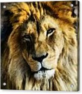 Its Good To Be King Portrait Illustration Acrylic Print