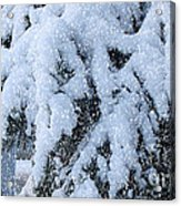 It's Snowing Acrylic Print