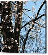 It's Spring 2013 Acrylic Print
