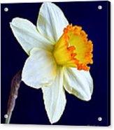 It's Spring - Square Acrylic Print