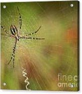 Itsy Bitsy Spider Acrylic Print