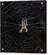 Itsy Bitsy Spider My Ass 2 Acrylic Print by Steve Harrington