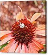 Itsy Bitsy Spider Walking On The Flower Acrylic Print