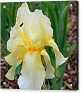Ivory And White Iris Acrylic Print