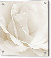 Ivory Ballerina Rose Flower Acrylic Print