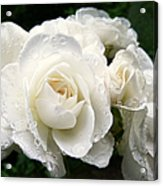 Ivory Rose Bouquet Acrylic Print by Jennie Marie Schell
