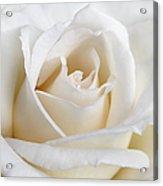 Ivory Rose Flower Acrylic Print