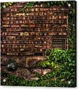 Ivy And Bricks Acrylic Print