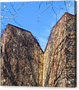 Ivy Covered Wall Acrylic Print