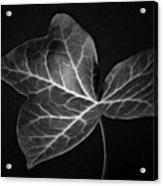 Black And White Flowers Macro Photography Art Work Acrylic Print