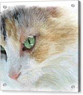 Izzy's Eyes Acrylic Print