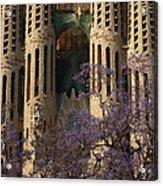 Jacaranda In Barcelona Acrylic Print by Christine Burdine