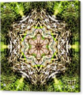 Jack In The Pulpit Mandala Acrylic Print