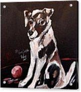 Jack Russell II Acrylic Print