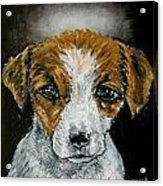 Jack Russell Terrier Angel Acrylic Print by Jay  Schmetz