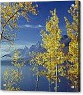 1m9206-jackson Lake And Aspens, Wy Acrylic Print