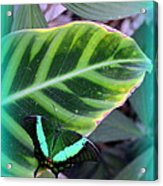 Jade Butterfly With Vignette Acrylic Print