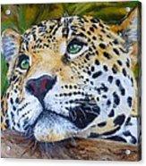 Jaguar Big Cat Original Oil Painting Hand Painted 8 X 10 By Pigatopia Acrylic Print