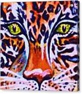 Jaguar Eyes-  Acrylic Print