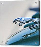 Jaguar Acrylic Print