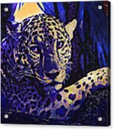 Jaguar- The Spirit Of Belize Acrylic Print