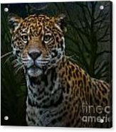 Jaguar Two Acrylic Print