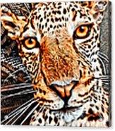 Jaguareyes Acrylic Print