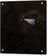 Jalama Fish Acrylic Print