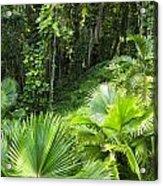 Jamaican Jungle Acrylic Print