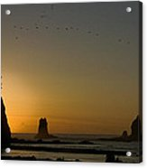 James Island Sunset And Birds Acrylic Print