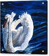 Jamie's Swan Acrylic Print