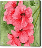 Jane's Flowers Acrylic Print