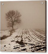 January Fog Acrylic Print