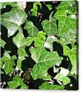 January Greenery Acrylic Print