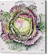 January King Cabbage  Acrylic Print