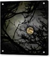 January Moon In Treetops Acrylic Print