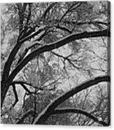 January Tree Acrylic Print