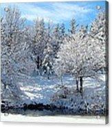 January Trees Acrylic Print