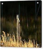 January's Gold 2013 Acrylic Print