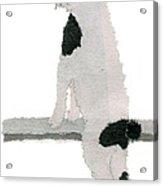 Japanese Bobtail Cat Hand-torn Newspaper Collage Art Pet Portrait Acrylic Print