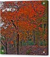 Japanese Cherry Tree Acrylic Print