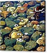Japanese Garden Pool Rocks Acrylic Print